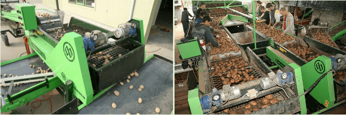 Машина сортирования картофеля