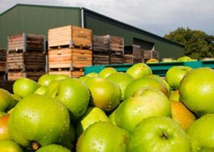 фруктохранилище строительство